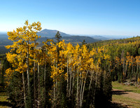 Turning of the Aspens