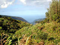 Trail to Back of Waipi'o Valley