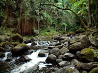 Hilo Waterfalls & River Parks