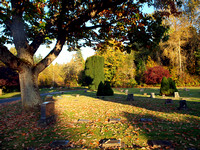 Fall in Bayview Cemetery