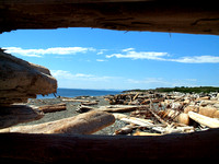 View From a Driftwood Fort